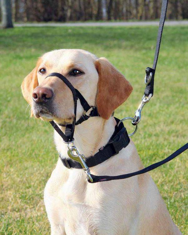 Antitrækseler/Snudeseler til hunde mod trækken ??? 5 størrelser, S