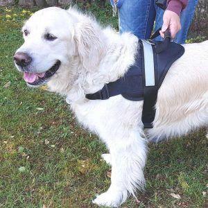 Kraftig PetDreams hundesele i sort polyester - 5 størrelser