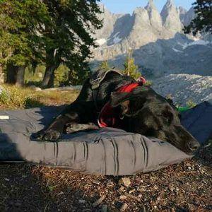 Outchair Hundetæppe med Varme