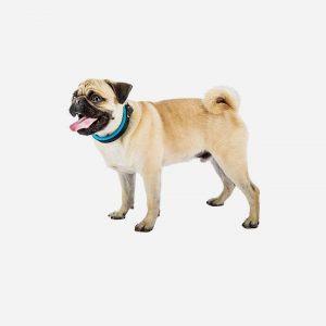 Ferplast Ergofluo hundehalsbånd - 4 størrelser & 2 farver