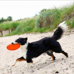 Trixie Hundelegetøjs Frisbee i Gummi - Ø18cm - Flyder
